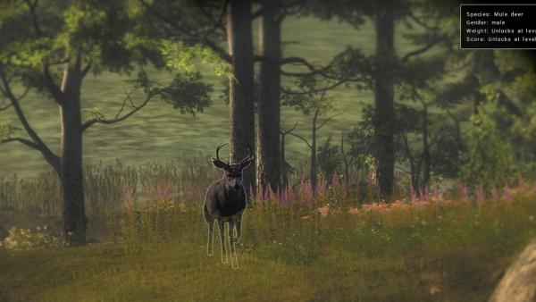 The Hunter #mule deer